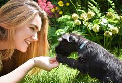 Becca and Milo (littlestschnauzer) Tags: milo becca pet dog pup puppy black mini schnauzer miniature 2019 garden june uk animal pets