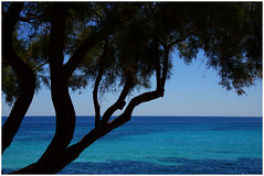 Mallorca - tree at the beach (na_photographs) Tags: ufer see meer baum