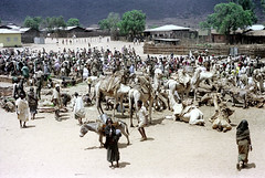 78-629 (ndpa / s. lundeen, archivist) Tags: nick dewolf color photograph photographbynickdewolf 1976 1970s film 35mm 78 reel78 africa northernafrica northeastafrica african ethiopia southernethiopia ethiopian people localpeople market streetmarket village unidentified unidentifiedvillage men women crowd animal animals camel camels kneel kneeling resting buildings houses homes fence sticks branches wood donkey headcovering turban turbans stick