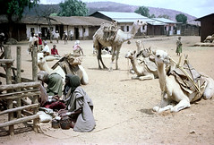 78-627 (ndpa / s. lundeen, archivist) Tags: nick dewolf color photograph photographbynickdewolf 1976 1970s film 35mm 78 reel78 africa northernafrica northeastafrica african ethiopia southernethiopia ethiopian people localpeople market streetmarket village unidentified unidentifiedvillage animal animals camel camels kneel kneeling resting landscape terrain hills trees buildings houses homes fence sticks branches wood thatchroof thatchedroof men women localmen localwomen saddle saddles sheetmetalroof