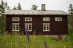 Sweden (MIKAEL82KARLSSON) Tags: sweden sverige sony samyang sommar summer green house old 50mm bokeh mikael82karlsson dalarna bergslagen