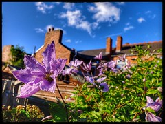Clematis in the garden (thescooterrider) Tags: clematis flower flora blue sky fujifilm fuji x30 chimney rooftop uk walsall westmidlands