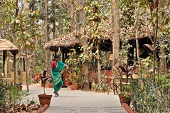 Let's Go To India -  And a Story (The Spirit of the World ( On and Off)) Tags: india northernindia lodge safari saltrees trees dry local pathway woman sari remote story nature