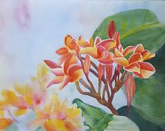 Plumeria (cheryl402) Tags: flower outside watercolor painting plumeria hawaii plant