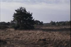 (no49_pierre) Tags: sanddunescoveredingrass film35mm landscape