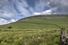 The Boundry (vincocamm) Tags: valley edenvalley cumbria pennines sheep tree wall drystone field hill green white clouds moody blue rugged grass cloudy june landscape nikon d5500