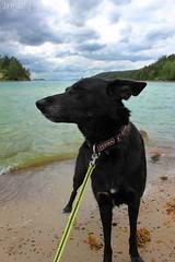 Billie 003 (Irmzaq photography) Tags: photography animal animalphotography nature naturephotography pet dog dogphotography huskymix shepherdmix blackdog sea waves clouds