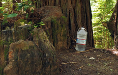Stashed (LeftCoastKenny) Tags: purisimacreekredwoods trees stumps brush water bottle