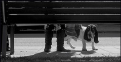 Fauna Backlight (nicoleforget) Tags: banc trottoir chien ombre flickr challenge cofo67 jambes cof067mari cof067dmnq cof067chon