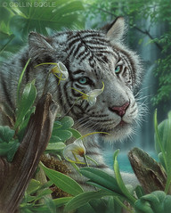 White Tiger of Eden (Collin Bogle) Tags: white tiger eden paradise painting