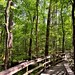 Enjoying a Stroll Along the Boardwalk Loop Trail (Congaree National Park)