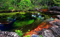 Khám phá dòng sông tự chuyển màu đẹp như thiên đường CANO CRISTALES ở Colombia (quynhchi19102016) Tags: ve may bay gia re di colombia