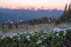 20190602Hurricane-76 (Laura Jacobsen) Tags: hurricaneridge mountains olympicnationalpark sunrise washington