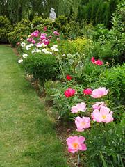 Peony WG IMG_3937 (Jennz World) Tags: ©jennifermlivick whistlinggardens wilsonville ontario canada peony peonies flower flowers