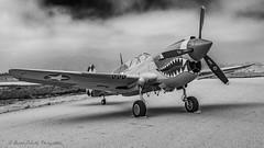 Curtiss P-40N Warhawk NL85104 (david g schultz) Tags: 05042019 airshow airplane d810 pof planesoffame aircraft outdoor vehicle curtissp40warhawk bw monochrome blackandwhite nl85104 davidschultzphotography
