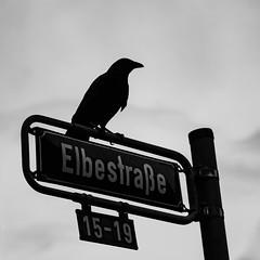 Watching (Christoph Wenzel) Tags: frankfurt hessen blackandwhite tamron18200mmf3563vc sonyalpha6000 vogel stadt tier bw silhouette deutschland frankfurtammain