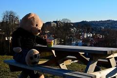 LRB_6711 (Lars.R.Bang) Tags: spring honey teddy teddybear trondheim norway