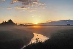 dawn (singinghedgehog) Tags: week252019 startingtuesdayjune182019 52weeksthe2019edition dawn sunrise river longestday geese mist meadow