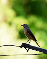 Uccellini-web (giovanni tiezzi) Tags: birds insects nature macrophotography green uccelli insetti natura macrofotografia verde nikon