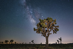Best Tree (Amar Raavi) Tags: joshuatree milkyway galaxy starrysky stars night nationalpark yucca tree nightscape landscape desert scenic iconic longexposure travel outdoors spring sky nps california usa