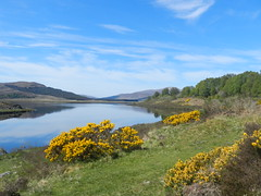 Loch Achanalt, Highlands of Scotland, May 2019 (allanmaciver) Tags: loch achanalt highlands gorse smell spring scotland water reflections scenery clouds weather low view allanmaciver