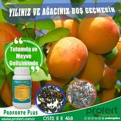 profert kysı (Profert Gübre) Tags: kayısı apricot çiftçi damlama sebze sebzecilik seracılık sera sulama fertilizer farms
