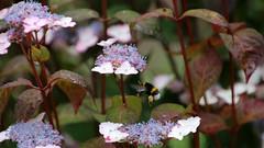 Farben und formen der Natur (manfredhelmut) Tags: blumenwiese natur farben