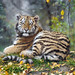 Young tigress in an autumnal seting