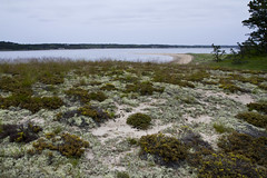 Ground Cover (brucetopher) Tags: beach wilderness overlook ocean travel sea vacation holiday wet water coast sand flora scenery waterfront view earth cove dunes tide dune scene brush historic coastal earthy vista inlet plain seashore tundra groundcover