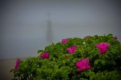 A Bit of Fog (Bud in Wells, Maine) Tags: fog webhannetriver wells maine drakesisland wellsharbor rosarugosa beachroses channelmarker flowers plants coastal