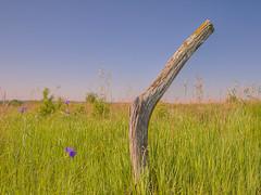 Post HFF (wdterp) Tags: fencepost fencerow fencefriday hff eddyvillesandduneprairie wapellocounty iowa