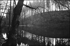 (jo.sa.) Tags: landschaft lebensraum kleinbild wasser wald analog analogefotografie schwarzweiss bw sw spiegelung