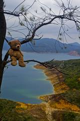 Photo (Adventures With Teddy) Tags: teddy adventures with photographers tumblr original hong kong travel bug blog internationaltravel high island reservoir water orange vibrant photography artists