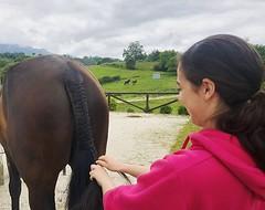 ➡️ Trenzado y peluquería: . Durante los campamentos de este #verano ☀️ enseñaremos técnicas de trenzado e higiene de las crines y colas de los caballos 🐴 . . . #cuadraelalisal #nuestroscaballos #caballos #horse #horselife #horsew