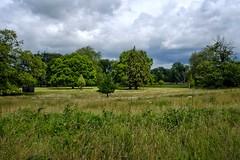 Kingston Lacy, Dorset. (margaretgeatches) Tags: summer sunshine clouds trees wildflowers grass green parkland nationaltrustproperty kingstonlacy wimborneminster dorset