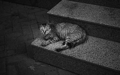 Mysterious Cat (aalabbas) Tags: streetphotography leica monochrome street m10p wildlife cat animals bw blackandwhite stairs summilux