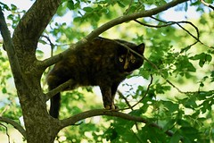 Cat in a tree (Camusi) Tags: france sudouest southwest toulouse 31 june juin champêtre canaldumidi canal balade péniche bucolic barge bargelife green verdure pets animaux cat chat catinatree