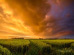 Crazy (Ellen van den Doel) Tags: wheat natuur netherlands storm nature graan overflakkee nederland outdoor goeree tarwe zonsondergang thunderstorm thunder kleur juni sunset regen sky rain color 2019 cloud field sommelsdijk zuidholland