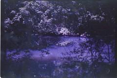 (✞bens▲n) Tags: leica m4 kodak ektapress 100 summilux 50mm f14 film analogue water reflection karuizawa nagano japan trees nature