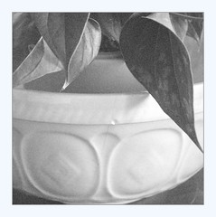 In memoriam, with anthurium nb (overthemoon) Tags: home bowl mixingbowl english broken cracked chipped utata ip ironphotographer utata:project=ip284 grain noise frame square anthurium leaves