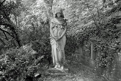 Engel auf Friedhof 19.6.2019 (rieblinga) Tags: berlin luisen i friedhof engel analog r9 agfa apx 100 sw adox rodinal 150
