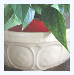 In memoriam, with anthurium (overthemoon) Tags: home bowl mixingbowl english broken cracked chipped utata ip ironphotographer utata:project=ip284 grain noise frame square anthurium leaves