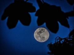 Moon (wujuanca) Tags: moonshot luna moon moonlover astrophotography astrofotografía nightshot night sony rionegro colombia