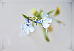 Tiny Bloomers (Robin Penrose) Tags: 201906 blooms flowers macro ps6 layers macroflower weeklythemechallengeentervote