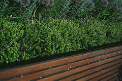 Park Life (youdoph) Tags: bench bush grass green nature park urban