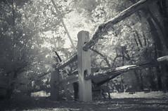 split rail (johngpt) Tags: trees infraredfilter bush fujifilmfinepixx100 hoyar72irfilter niksilverefex places rakes wheelbarrows abqbotanicgardens fence ~~fencefriday~~ hff