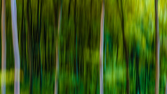 Time Diletation in the Forest... (Ody on the mount) Tags: abstrakt anlässe bäume canon g7xii grün pflanzen powershot wald wanderung abstract forest green icm trees woods