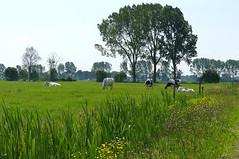Rural landscape near Dalfsen - Overijssel (joeke pieters) Tags: 1470725 panasonicdmcfz150 salland overijssel nederland netherlands holland dalfsen wandelsporendalfsenommen2 landelijk rural landschap landscape landschaft paysage