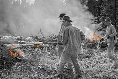 Telkkämäki slash-and-Burn (JP Korpi-Vartiainen) Tags: june finland countryside burn agriculture casque kaavi pohjoissavo telkkämäki man forest fire grove forestry kesä luonto kesäkuu maaseutu kaski metsikkö kaskiviljely summer nature smoke traditional smoky puu mies metsä spinney slashandburn savu miehet perinteinen metsämaa polttaa savuinen tree work woodland woods working tuli työ viljely työmenetelmä