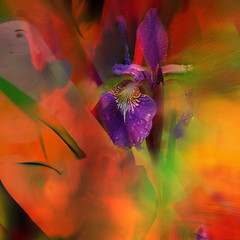 iris... (Mark Noack) Tags: light color photoshop layer layering surreal expressionism abstract futurist abstraction shockofthenew hhs sliderssunday